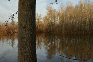 Espace Naturel Sensible du Marais de Fontenay