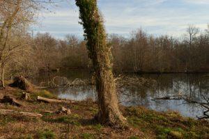 Observatoire du Petit Marais<br> Espace Naturel Sensible du Marais de Misery
