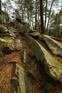 Platière du Coquibus<br>Forêt domaniale des Trois Pignons