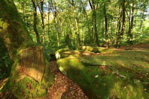 Chaos de Grès au dessus de la Pierre Clouise<br> La Forêt Domaniale de Retz