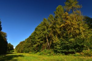 L'Allée royale de Mazincourt<br> La Forêt Domaniale de Retz