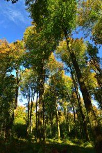 La Forêt Domaniale de Retz
