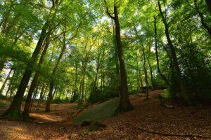 La Pierre Clouise<br> La Forêt Domaniale de Retz