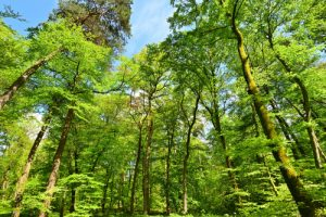 Forêt domaniale de Retz