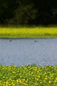 L'étang de La Brosse -  Le Golfe du Morbihan