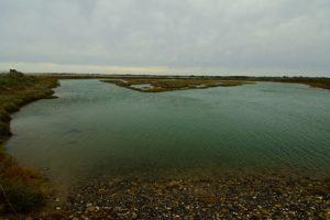 La Réserve Naturelle de Lilleau des Niges<br> Île de Ré