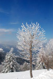Paysages enneigés au Trehkopf<br> Parc naturel régional des Ballons des Vosges