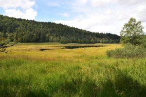 Etang de Machey avec sa tourbière Parc naturel régional des ballons des Vosges
