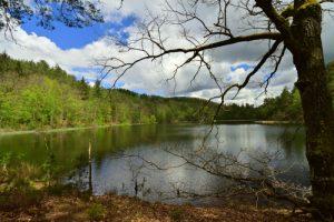 Étang de Lieschbach<br> Réserve Naturelle Nationale des rochers et tourbières du Pays de Bitche<br> Parc Naturel Régional des Vosges du Nord