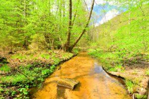 Ruisseau de Rothenbach<br> Réserve Naturelle Nationale des rochers et tourbières du Pays de Bitche<br> Parc Naturel Régional des Vosges du Nord