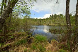 Étang de Rothenbach<br> Réserve Naturelle Nationale des rochers et tourbières du Pays de Bitche<br> Parc Naturel Régional des Vosges du Nord