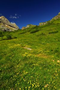 Le plateau de Bellevue<br> Haute vallée du Gave de Pau<br> Parc Naturel National des Pyrénées